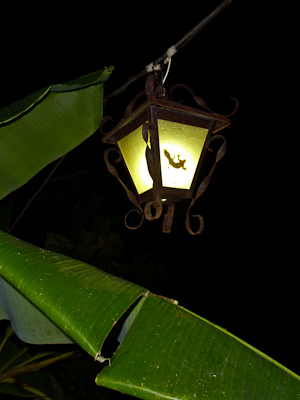 Gecko in a light